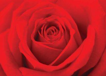 U-RO DECOR RED ROSE ภาพพิมพ์ ขนาด 50 x 70 ซม.
