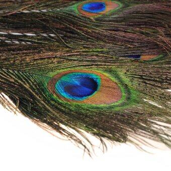Harga 100pcs lots Real Natural Peacock Tail Eyes Feathers 9.8-11.8 Inches / about 25-30cm