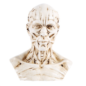 Harga Medical Model Human Anatomy Skull Head Muscle Bone Artist Drawing Model 10cm Height(White) - intl