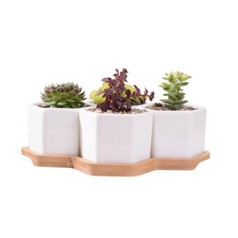 My Decor 4Pcs White Ceramic Hexagon Succulent/Cactus Plant Pot with Bamboo Tray - intl