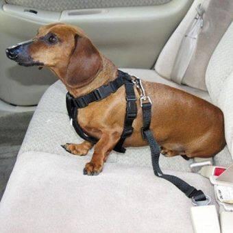 อยากขาย สีดำรถพาหนะรถยนต์เข็มขัดนิรภัยคาดเข็มขัดนิรภัยเบาะสำหรับสัตว์เลี้ยงสุนัขแมว